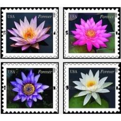 4 عدد تمبر گل - نیلوفرهای آبی - آمریکا 2015