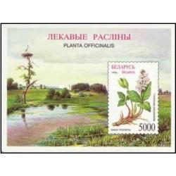 سونیرشیت گیاهان بلاروس - بوته ها - بلاروس 1996