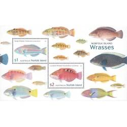 مینی شیت ماهی  - استرالیا جزایر نوفولک 2018